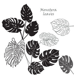 Silhouette tropical monstera leaves black vector