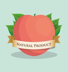 Apricot natural product leaves ribbon vector