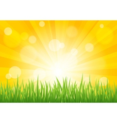 Bright sun effect with green grass field vector image vector image