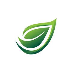 elegant leaf vector image