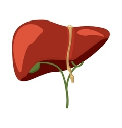 Human liver icon in cartoon style vector
