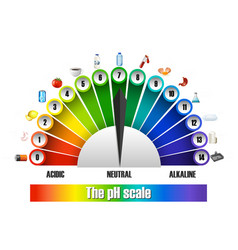 The ph scale on white background vector