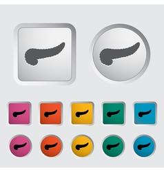 pancreas vector image vector image