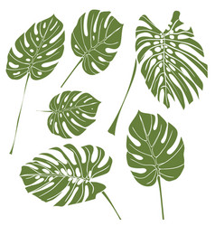 silhouette tropical monstera leaves green vector image vector image
