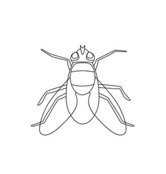 fly line drawing vector image