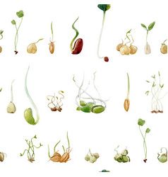 watercolor beans peas seeds sprouts pattern vector image