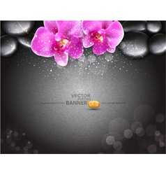 romantic background with two orchids vector image