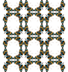 butterfly colorful geometric seamless pattern vector image