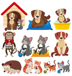 Different types of pets on white background vector