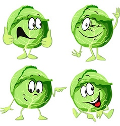 green cabbage cartoon isolated on white background vector image