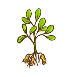 Peanut bush doodle icon cartoon vector