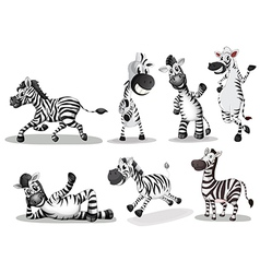 Playful zebras vector image