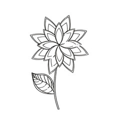 star anice flower decoration sketch vector image
