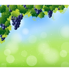 Vine summer corner vector