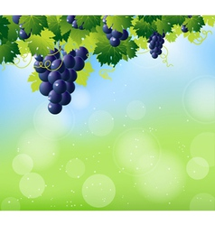 vine summer top vector image vector image