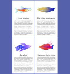 Betta and neon tetra fishes set isolated on white vector
