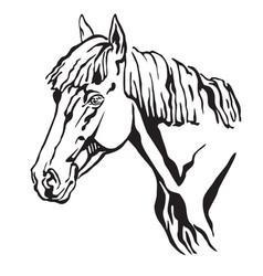 Decorative portrait of horse 4 vector