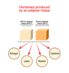 Hormones produced adipose tissue vector