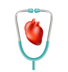 human heart and stethoscope isolated on a white vector image