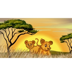 two cubs vector image