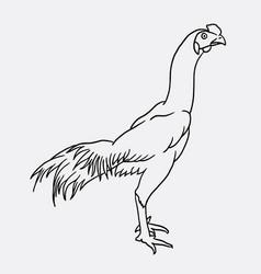 rooster sketch vector image