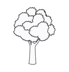tree foliage woody stem branching plant outline vector image