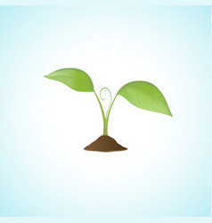 Young plant isolated vector image