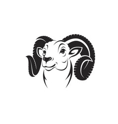 bighorn ram head on white background vector image