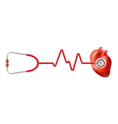 human heart and heart beat on ekg with stethoscope vector image
