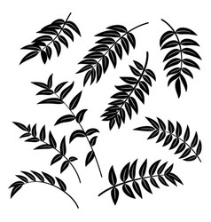 Leaves of plants pictograms vector