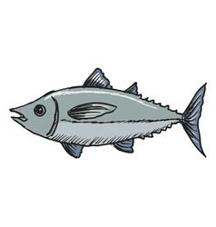 tuna vector image vector image