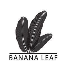banana silhouette leaf logo vector image