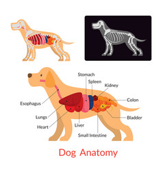 Dog anatomy vector