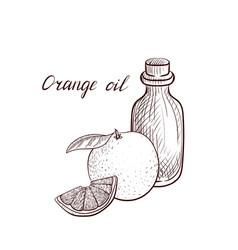 drawing orange oil vector image