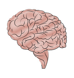 Human brain organ medical healthcare science vector