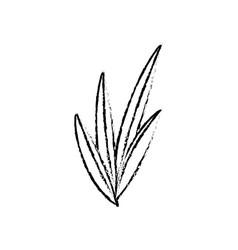 leaves plant nature foliage botanical image sketch vector image