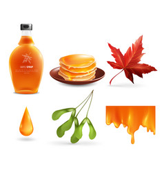 maple syrup set vector image