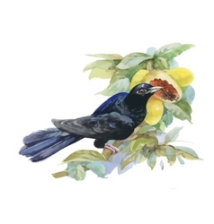 Watercolor exotic bird and tropical fruits vector