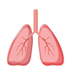 Human lungs icon in cartoon style vector image