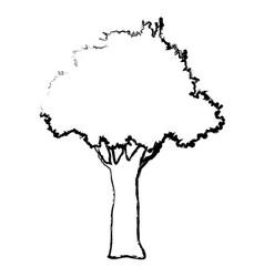 natural tree foliage branch trunk sketch vector image vector image