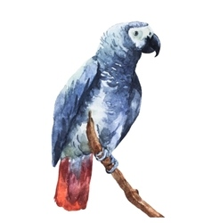 Watercolor parrot vector image