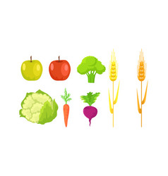 apple broccoli cauliflower carrot radish wheat vector image vector image