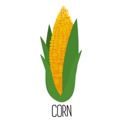 Corn cob isolated on white background vector