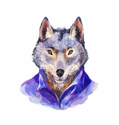 hipster wolf in purple shirt portrait wild vector image