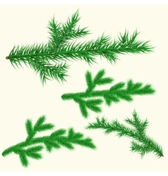 pine branches set vector image vector image
