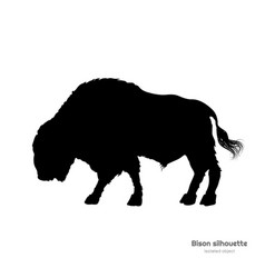 black silhouette of bison on white background vector image