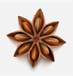 realistic cinnamon spice isolated on grey vector image