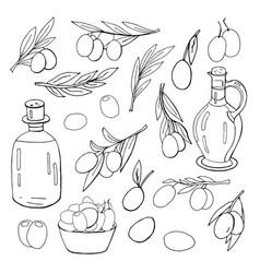 set of olives olive oil bottles and olives vector image