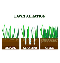 Stages lawn aeration vector