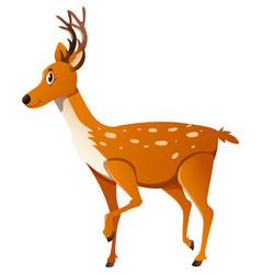 Wild deer standing sideway vector